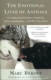 A summary of Marc's research on animal emotions titled The Emotional Lives of Animals: A Leading Scientist Explores Animal Joy, Sorrow, and Empathy and Why They Matter was published in March 2007 by New World Library and he is currently completing a book on the evolution of moral behavior with Jessica Pierce titled Wild Justice: Reflections on Empathy, Fair Play, and Morality in Animals for the University of Chicago Press.