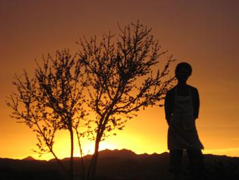 Sunset at Tree of Life Rejuvenation Center