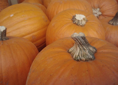 Pumpkins - Photograph by Dena Ventrudo